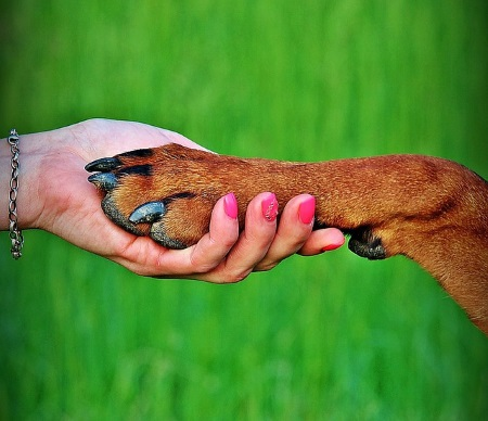 running a pet care business
