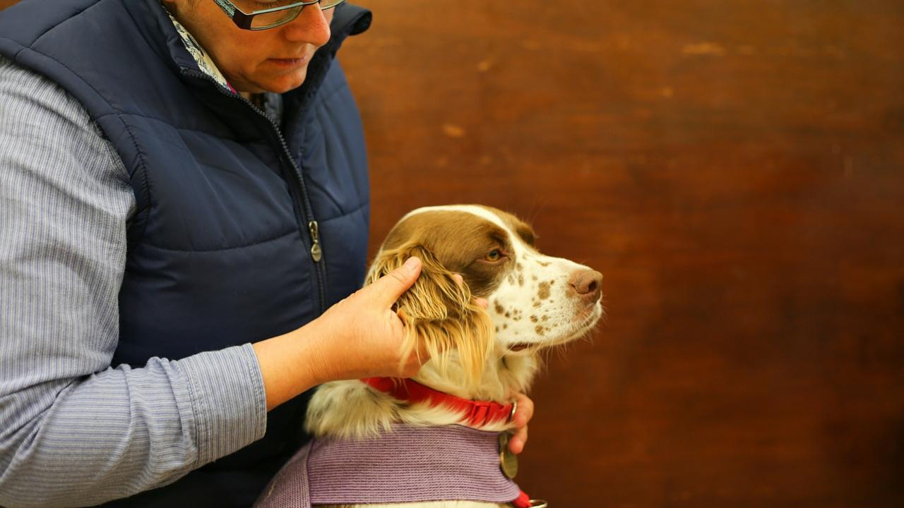 How to help your pet overcome stress - TTouch method